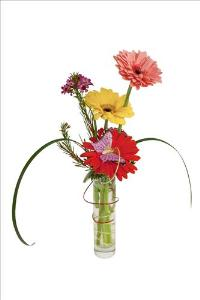 Daisy Delight by McAdams Floral, your Victoria, Texas (TX) Florist