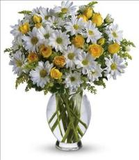 Amazing Daisy by McAdams Floral, your Victoria, Texas (TX) Florist