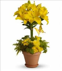 Yellow Fellow by McAdams Floral, your Victoria, Texas (TX) Florist