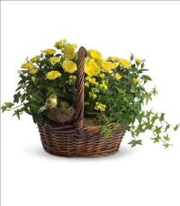 Yellow Trio Basket by McAdams Floral, your Victoria, Texas (TX) Florist