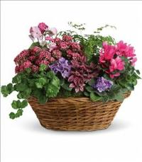 Simply Chic Mixed Plant Basket by McAdams Floral, your Victoria, Texas (TX) Florist