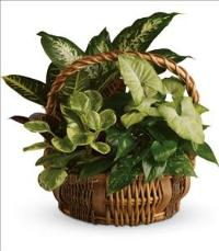 Emerald Garden Basket by McAdams Floral, your Victoria, Texas (TX) Florist