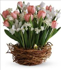 Tulip Song by McAdams Floral, your Victoria, Texas (TX) Florist