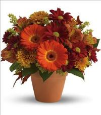 Golden Glow by McAdams Floral, your Victoria, Texas (TX) Florist