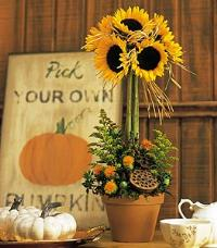 Sunflower Topiary by McAdams Floral, your Victoria, Texas (TX) Florist