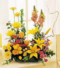 Parallel Vegetative by McAdams Floral, your Victoria, Texas (TX) Florist
