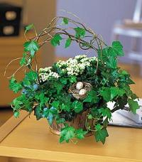 Kalanchoe & Ivy Basket by McAdams Floral, your Victoria, Texas (TX) Florist