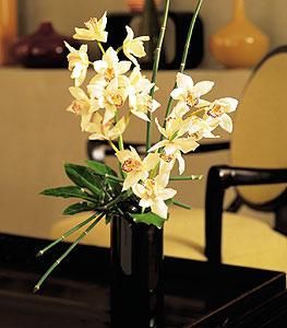 Cymbidium Vase by McAdams Floral, your Victoria, Texas (TX) Florist