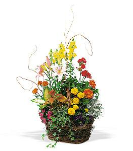 Large Summer Planter by McAdams Floral, your Victoria, Texas (TX) Florist