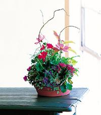 Small Summer Planter by McAdams Floral, your Victoria, Texas (TX) Florist
