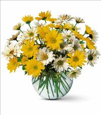 Daisy Bubble Bowl by McAdams Floral, your Victoria, Texas (TX) Florist