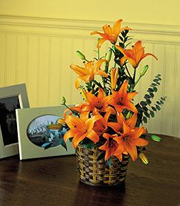 Orange Asiatic Lilies by McAdams Floral, your Victoria, Texas (TX) Florist