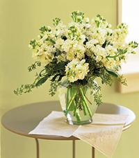 White Stock by McAdams Floral, your Victoria, Texas (TX) Florist