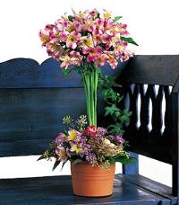 Alstroemeria Topiary by McAdams Floral, your Victoria, Texas (TX) Florist