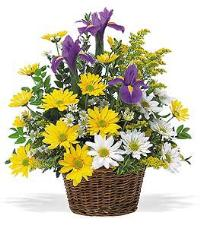 Iris & Daisy Basket by McAdams Floral, your Victoria, Texas (TX) Florist