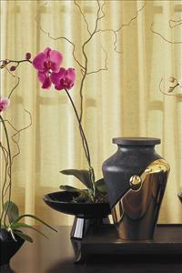 Medium Orchid in Lg. Bowl by McAdams Floral, your Victoria, Texas (TX) Florist