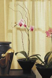 Small Orchid in Sm. Bowl by McAdams Floral, your Victoria, Texas (TX) Florist