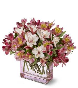 Always Alstroemeria by McAdams Floral, your Victoria, Texas (TX) Florist