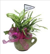 Boss Lady Mug of Plants by McAdams Floral, your Victoria, Texas (TX) Florist