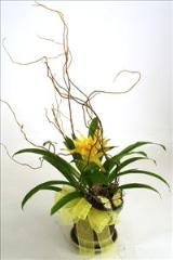 Nature Inspired Bromeliad by McAdams Floral, your Victoria, Texas (TX) Florist