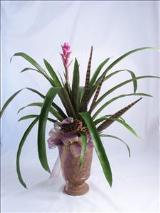 Marblized Bromeliad by McAdams Floral, your Victoria, Texas (TX) Florist