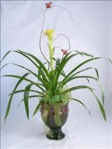 Earthen Green Bromeliad by McAdams Floral, your Victoria, Texas (TX) Florist