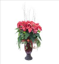 Stately Christmas Poinsettia by McAdams Floral, your Victoria, Texas (TX) Florist