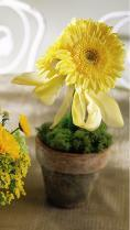 Yellow Gerbera Centerpiece by McAdams Floral, your Victoria, Texas (TX) Florist