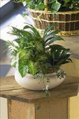 Green Garden Bowl by McAdams Floral, your Victoria, Texas (TX) Florist