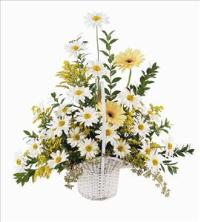 Daisies & Yellow Gerberas by McAdams Floral, your Victoria, Texas (TX) Florist