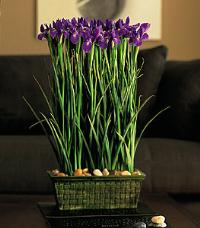 Blue Iris Stack by McAdams Floral, your Victoria, Texas (TX) Florist