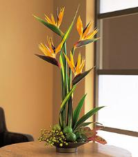 Birds of Paradise by McAdams Floral, your Victoria, Texas (TX) Florist