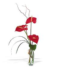 Anthuriums in a Vase by McAdams Floral, your Victoria, Texas (TX) Florist